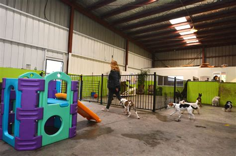puppy day care so you ve been kicked out of doggie day care what next dogtime