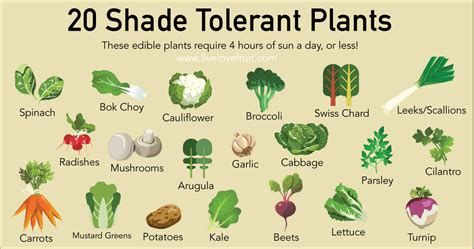 what garden vegetables like shade 20 shade tolerant plants to grow in your garden this