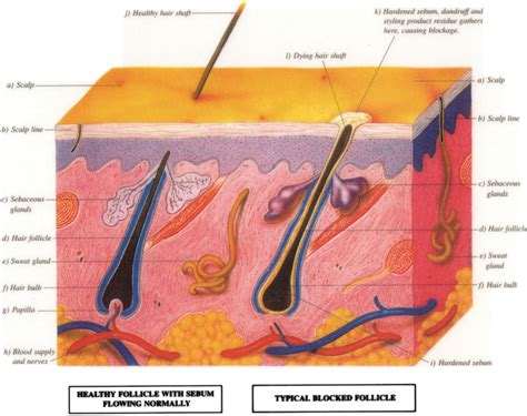 how to strengthen hair follicles in females over 40 hair follicle