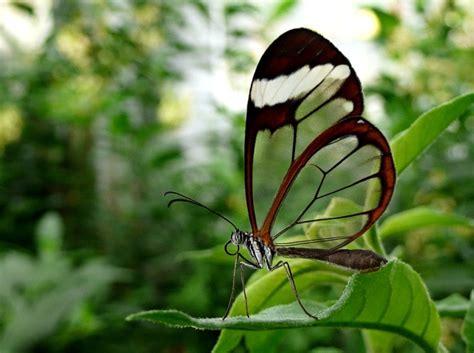 rare animals top  rarest butterflies   world hubpages