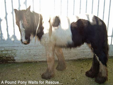 how many pony in a pound poundpony