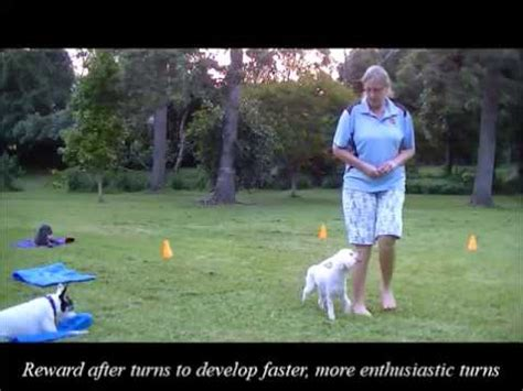 how to start agility for dogs how to start your agility in shadow handling pt 1