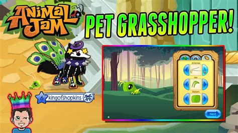 animal jam  pet grasshopper   toy codes