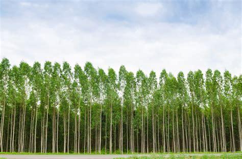 piante da giardino alto fusto piante alto fusto da giardino potatura alberi modena