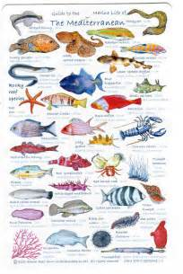 Guide to Mediterranean Fish