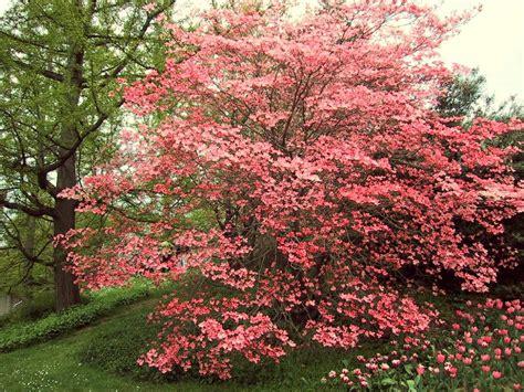 alberi nani da giardino sfondi per lo schermo fiori alberi