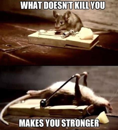 Funny Memes Pinterest - stay strong little guy animal memes pinterest