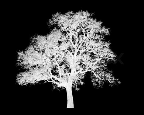 White Tree - lonely white tree graphic isolated on black background