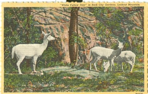 Rock City Gardens Coupons Rock City Gardens Coupons Chattanooga Area Discounts Rock City Gardens Rock Zoo Coupons Free