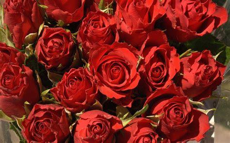 red rose desktop wallpapers wallpaper cave flower wallpapers red rose wallpaper cave