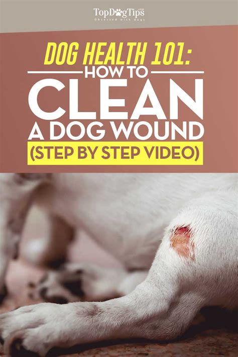 is a dogs clean how to clean a wound a step by step guide top tips