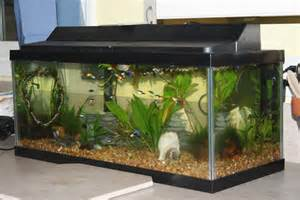20 gallon aquariums