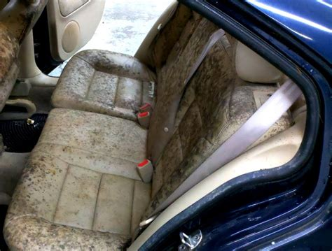 How To Remove Mold From Car Upholstery by Treat And Prevent Mold And Mildew In Home And Cars