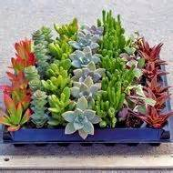 succulents that don t need light low light plants on pinterest house plants plants and
