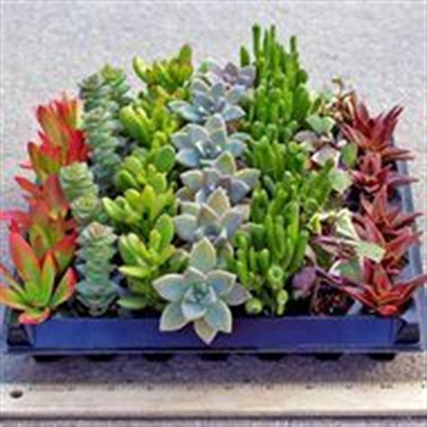 succulents that don t need light low light plants on house plants plants and