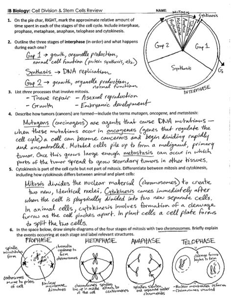 Section 10 2 Cell Division Answer Key by Cell Division Worksheet Lesupercoin Printables Worksheets
