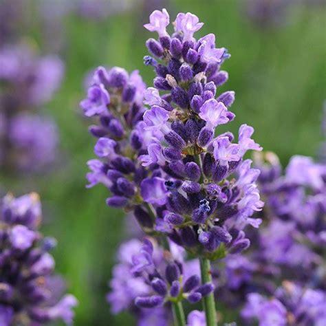 top new sun loving perennials for 2014 gardens summer and walkways