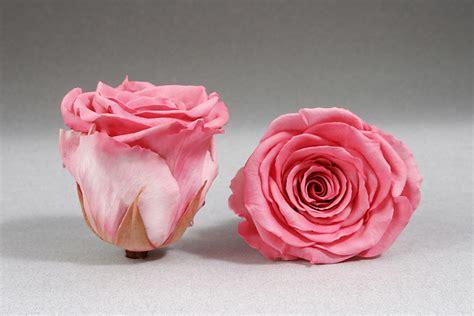 fiori stabilizzati procedimento stabilizzati joyflor