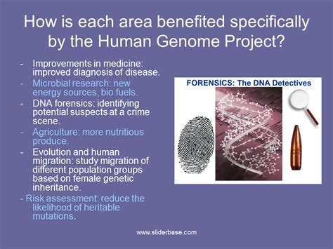section 13 2 the human genome project the human genome project presentation genetics sliderbase
