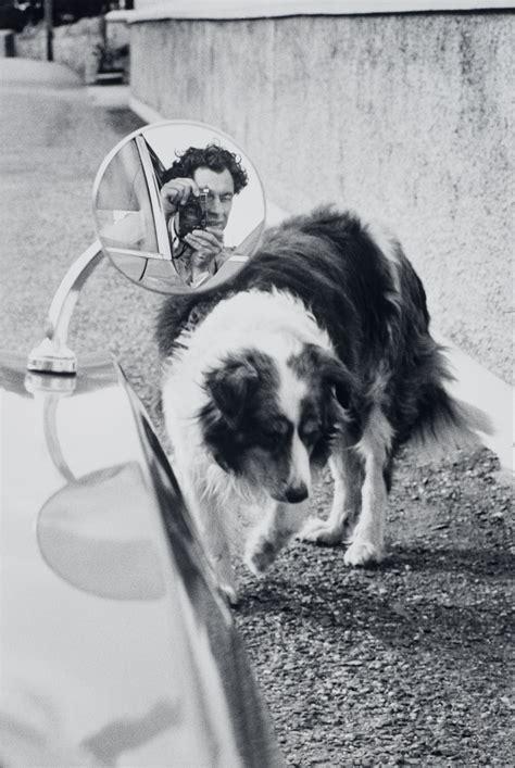 elliott erwitts dogs elliott erwitt an itinerant life in photographs flashbak