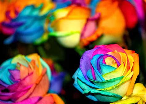 Box A Single Rainbow Multicolor Happy Preserved Flower flower homes rainbow roses