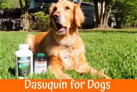 dasuquin for large dogs 2017 best safe vet recommended chews us bones