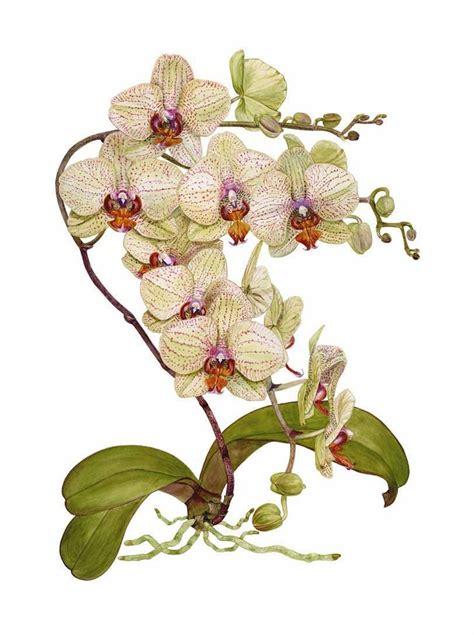 papier peint sp馗ial cuisine les 121 meilleures images du tableau aquarelle botanique