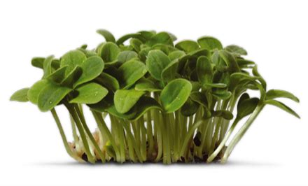 Decorative Sticks For The Home Koppert Cress Other Countries