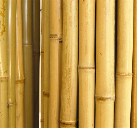 How To Make A Bamboo L by Bamboo Fence 1 Quot D X 4 H X 8 L