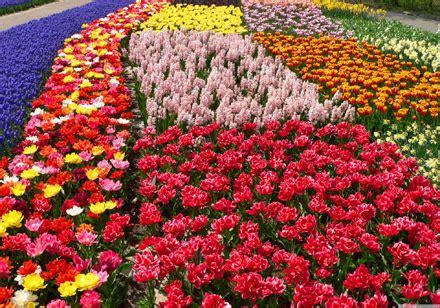 liguria fiori ditelo con un fiore sostenibile sumflower arriva sulla