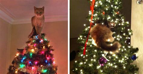 funny wayscto keep cats off christmas tree 15 cats helping decorate trees bored panda