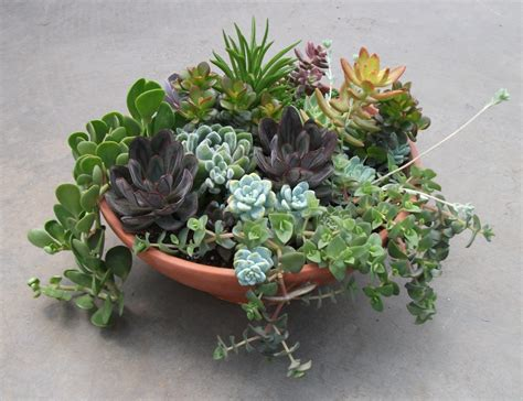 low light succulents fresh indoor succulent bowl 19357