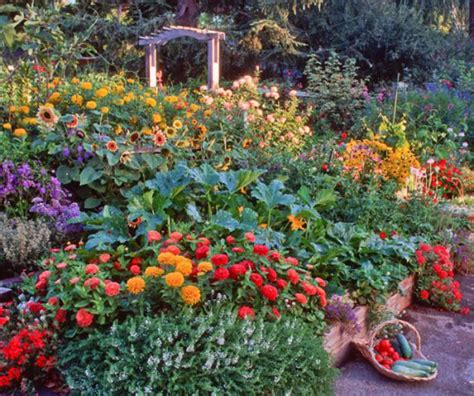 characteristics of the edible landscaping decorifusta