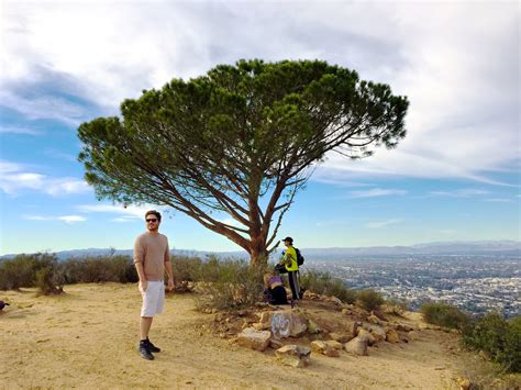 tree los angeles the wisdom tree is becoming an l a landmark but will
