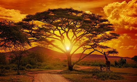 escorted tour of south africa newmarket holidays