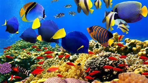 beautiful coral reefs  undersea creature