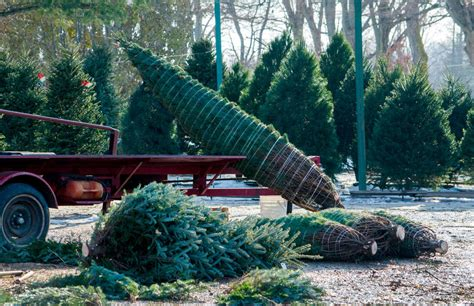 christmas tree farms upstate ny best tree farms near new york city ct and nj thrillist