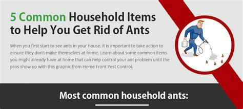 ant killer home remedy hrfnd