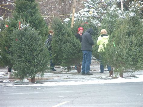 l m tree farm christmas trees 1290 e chicago ave