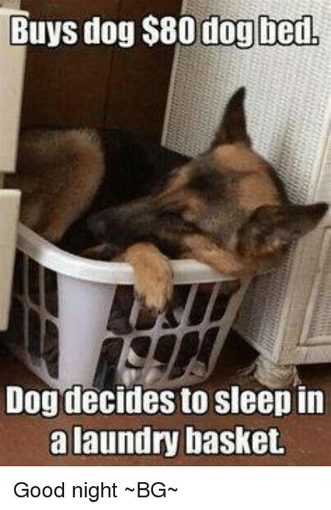25 best memes about dog bed dog bed memes