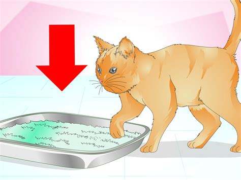 cat peeing in house how to keep cats from urinating in house plants 12 steps