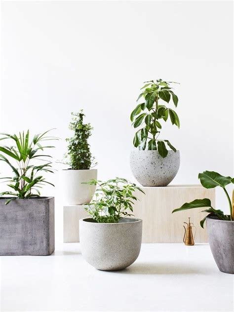 small planter pots 25 best ideas about concrete pots on cement