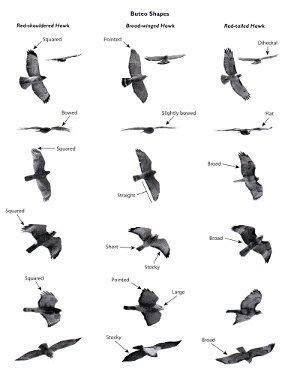 233 best birds general info images on pinterest birds