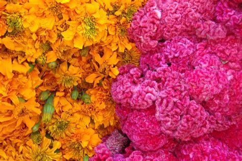 imagenes de flores de muertos venta de flores para el d 237 a de muertos en puebla m 233 xico