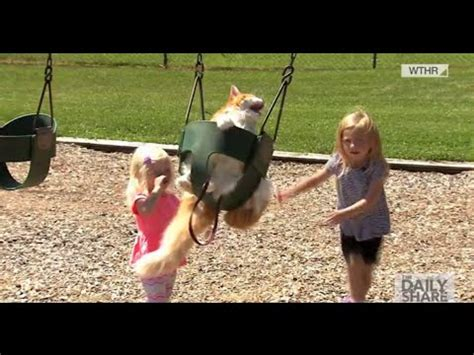 swings katze 14 year marley the cat to swing