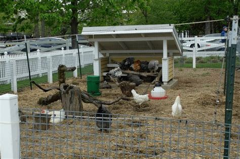 farm hens picture of lincoln park zoo chicago