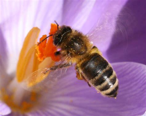 abeille assurances si鑒e social abeilles quelle catastrophe contrepoints