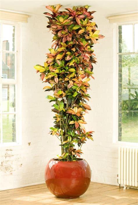 plantas de interior fotos planta alta  el salon