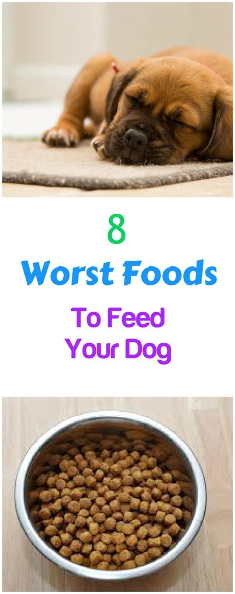worst puppy food 8 worst foods you can feed your petslady