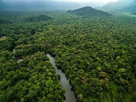 Amazonas Regenwald Pflanzen by Der Regenwald Bedrohtes Gr 252 N Die Bloggerbande